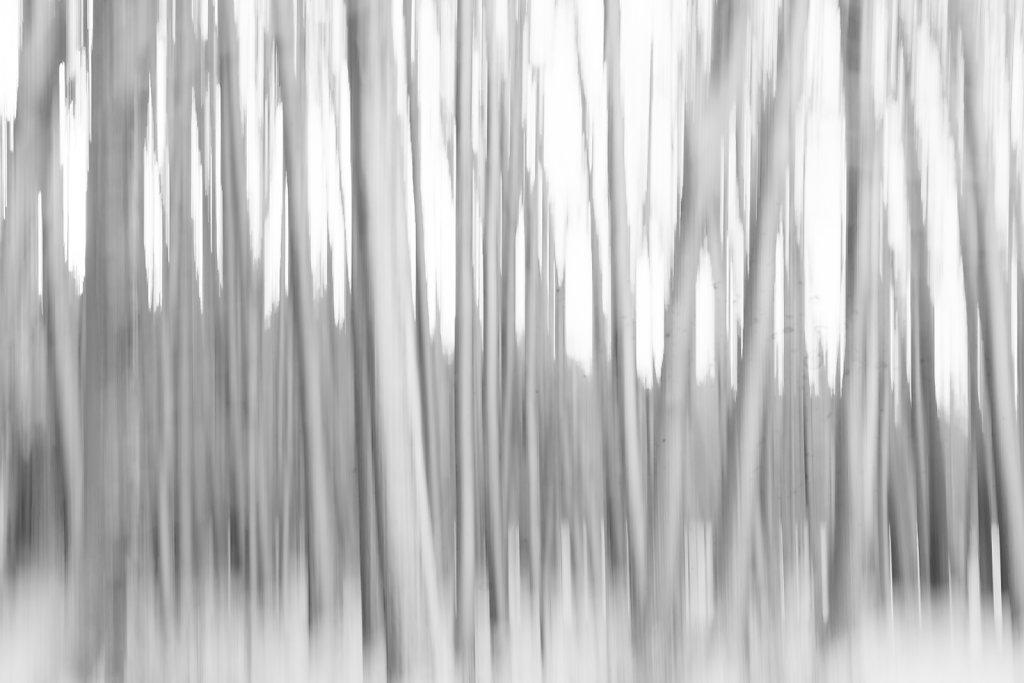 Wald abstrackt gestreckt